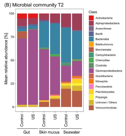 Figure 3 : Groupes bactériens identifiés dans l'intestin (« gut »), le mucus cutané (« skin mucus») et l'eau d'élevage (« seawater ») aux temps T1 (A) et T2 (B).